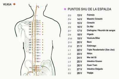 PUNTOS SHU DE LA ESPALDA - BEI SHU.jpg