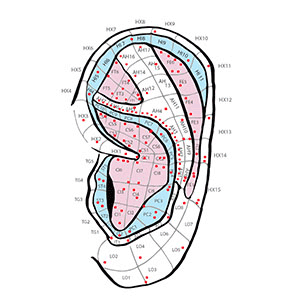icon for:Punto Alergia - Auriculoterapia on map auriculo-1